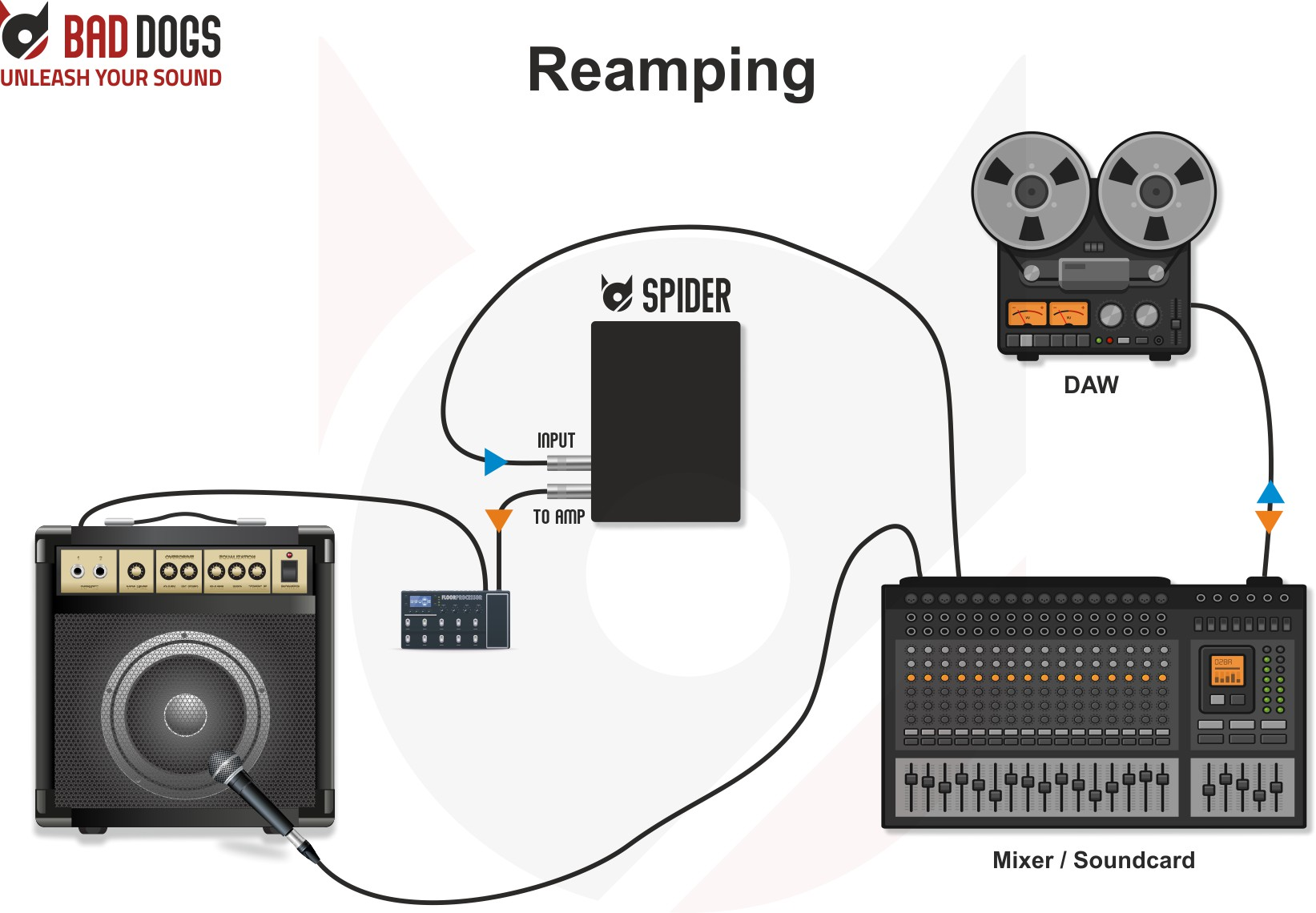 Spider Use Case Reamping